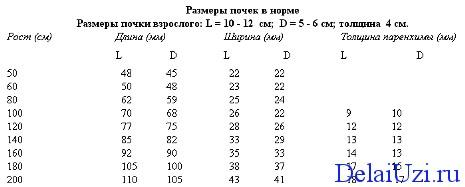 Таблица нормальных показателей размеров почек